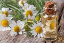 New research shows chamomile oil can reduced the need for analgesics, ease stiffness and improve levels of physical activity