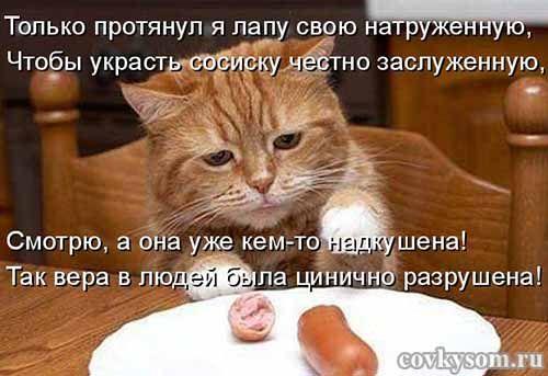 """Подборка прикольных котоматриц на кулинарную тему: """"Незваный ужин"""". Несколько фото + видео."""