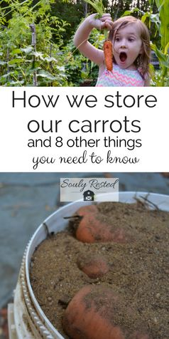 #StoringCarrots over winter | keep carrots all winter | #carrot storage | fall o...