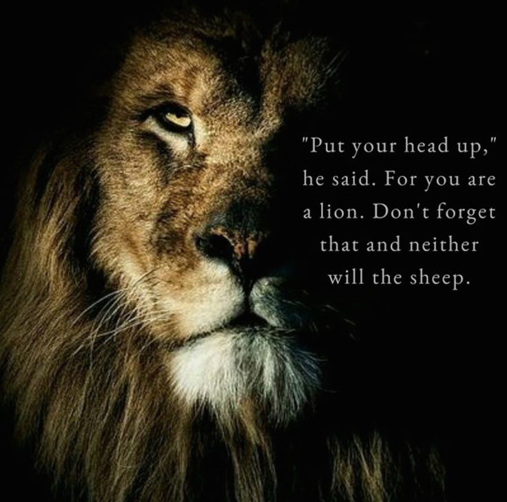 'Lion' #atticuspoetry #atticus #poetry #loveherwild #lion