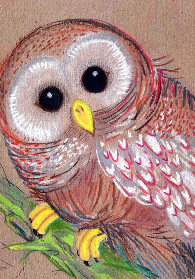 Chalky Owl                                                                                                                                                                                 More