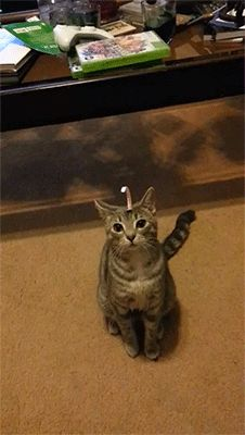 Untitled, sizvideos:This cat is so confused about the paper...