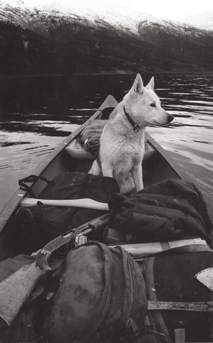life is good~a dog and a canoe.. this is the actual dream