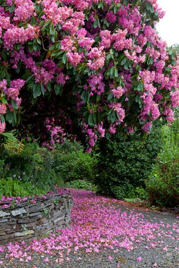 Rhododendren: Gardens Roses, Pink Flower, Gardens Design Idea, Doors Design, Modern Gardens Design, Flower Trees, Roses Flower, Interiors Design, Interiors Gardens