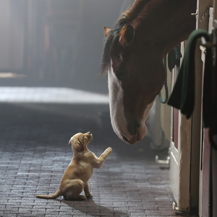 "Budweiser ""Puppy Love"" - so sweet :)"