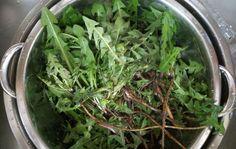 Травы для похудения, сжигающие жир, помогут вывести токсины из организма и улучшат обмен веществ. Это полезно знать всем, кто мечтает похудеть в области живота!