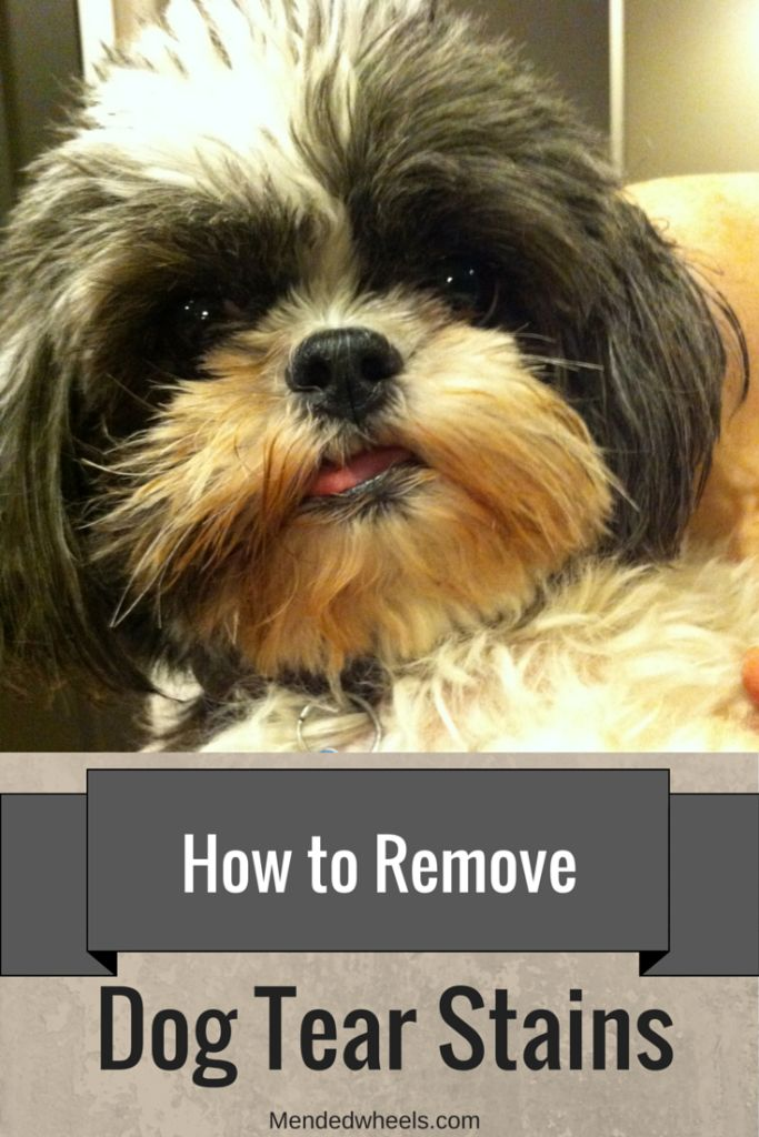 Rust colored tear stains around your dog's eyes can be unsightly on a light colored coat. These tips should help make the stains better or stop them! ***Giveaway good for 2 more days*** Don't miss out!