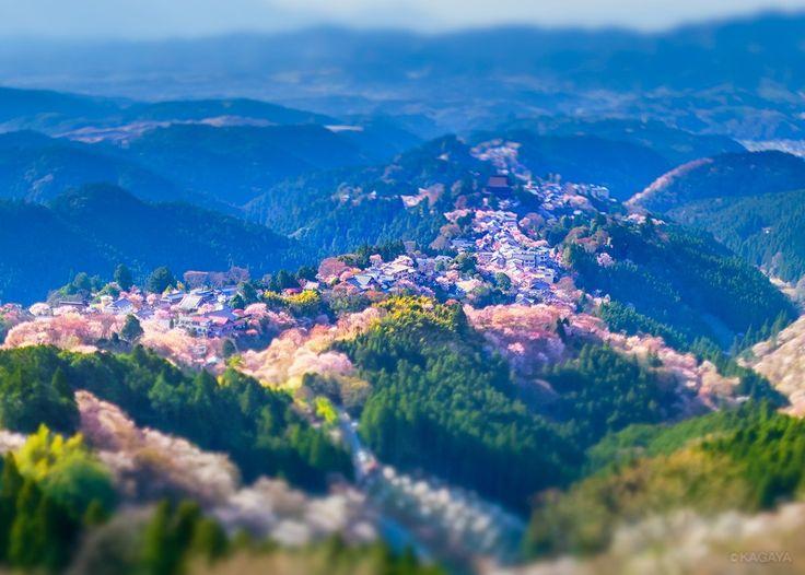 KAGAYA認証済みアカウント @KAGAYA_11949  4月21日  千本桜を眺めた日 1、うららかな午後 2、たそがれの残照 3、月夜に浮かぶ 先週、奈良県吉野山にて撮影。1と2はティルトシフトレンズ使用。