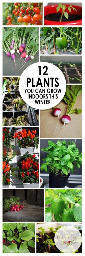 12 plants you can grow indoors this winter growing for What plants can i grow indoors