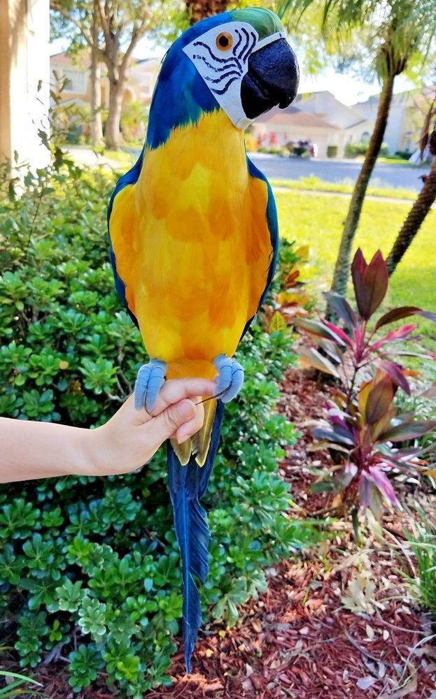LARGE HANDCRAFTED ULTRA LIGHTWEIGHT PARROT WITH REAL FEATHERS//BENDABLE FEET!