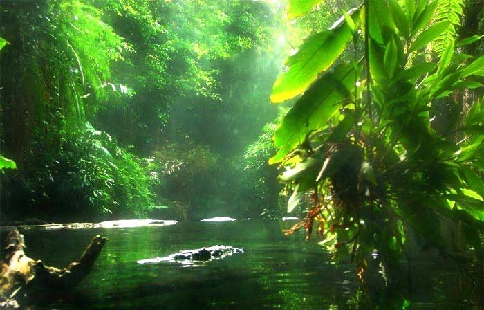 Amazon forest, Brazil
