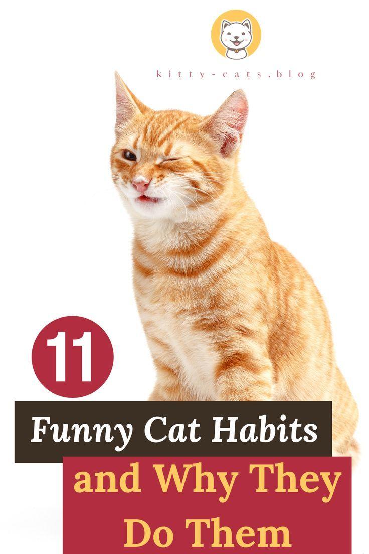 11 Funny Cat Habits And Why They Do Them Kitty Cats Blog In 2020 Cat Behavior Crazy Cats Kitten Cartoon