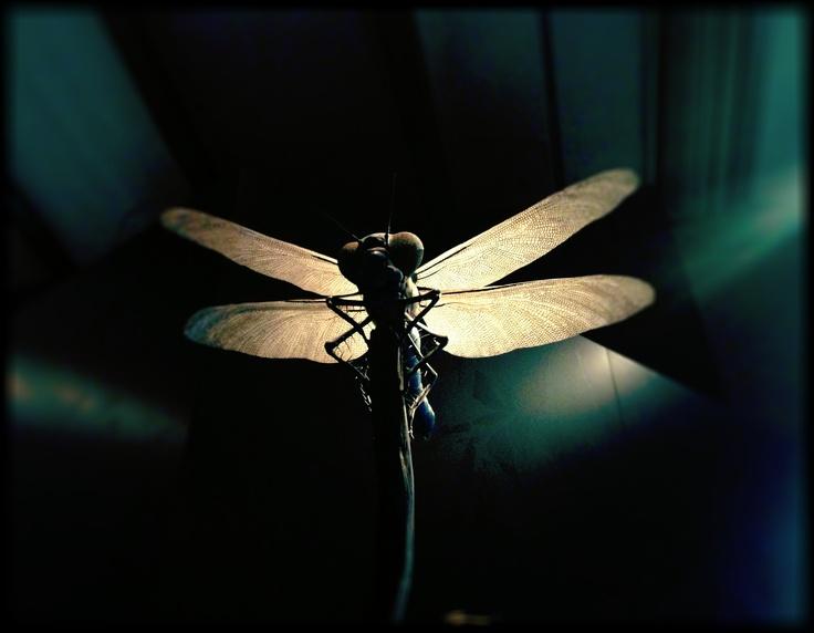 Naturkundemseum Berlin Fly, Fliege