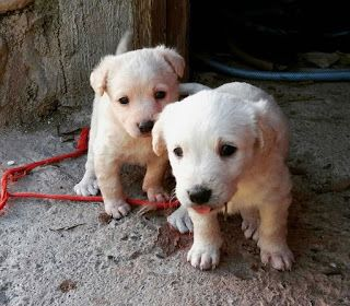 CACHORROS EN ADOPCIÓN: Camada de 5 cachorros preciosos en situación delic...