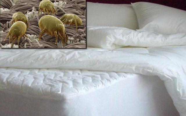 DESINFECTA TU COLCHÓN GRATIS Y EN MINUTOS Puedes desinfectar tu colchón con un…  #Nutrición y #Salud YG > nutricionysaludyg.com