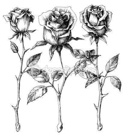 20 besten Rosen Tattoo Bilder auf Pinterest   Rosen tattoo, Tattoo ...