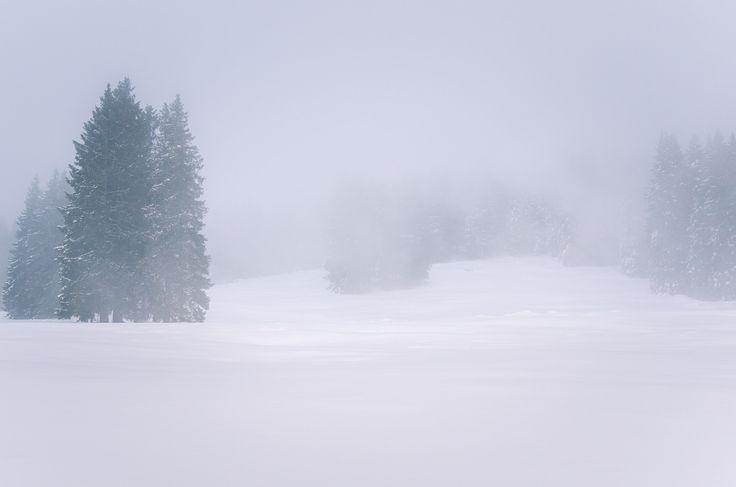 Foggy Winter Landscape - Winter Landscape Shrouded in Thick Freezing Fog