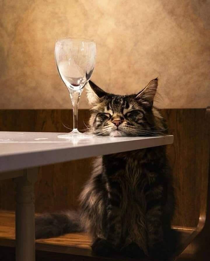 картинки кот с рюмкой