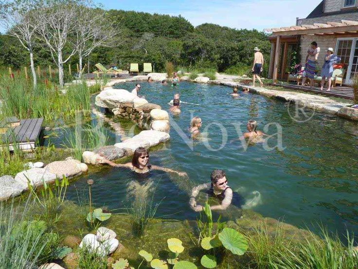 17 best images about natural swimming pond on pinterest for Garden pool facebook