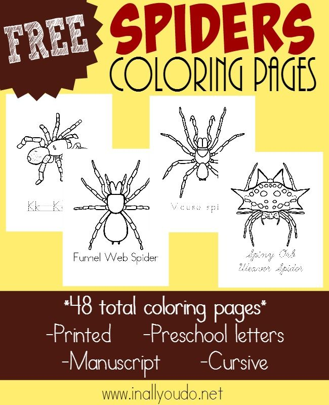 If you're studying types of spiders, don't miss these FREE printable Coloring Pages. 48 total pages for PreK-5th grade!! :: www.inallyoudo.net