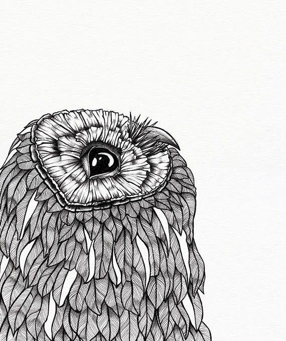 Curious Owl art print  10 x 12 unframed  animal