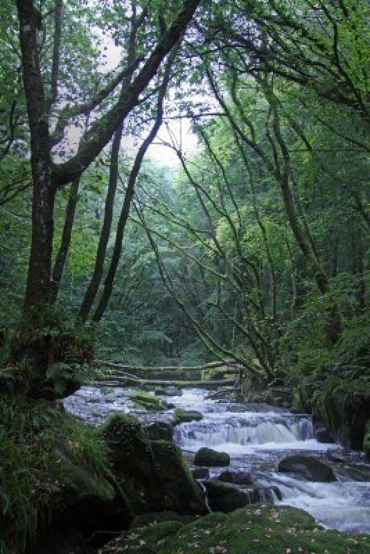 Golitha Falls near Liskeard, Cornwall. Time your visit right and you can see trout jumping the falls to get upstream for spawning.