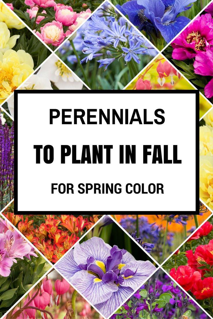 25 B Sta Spring Garden Id Erna P Pinterest Blommor