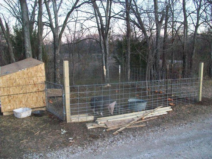 Almost Complete Building 12x20 Coop Update Post 41
