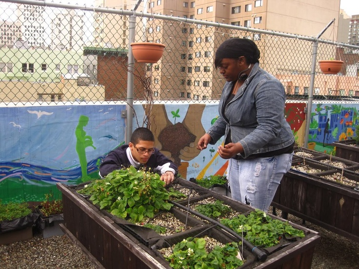 urban gardens, an ecological trend gaining supporters which helps improving the air in cities, while providing us with 100% ecological vegetables.