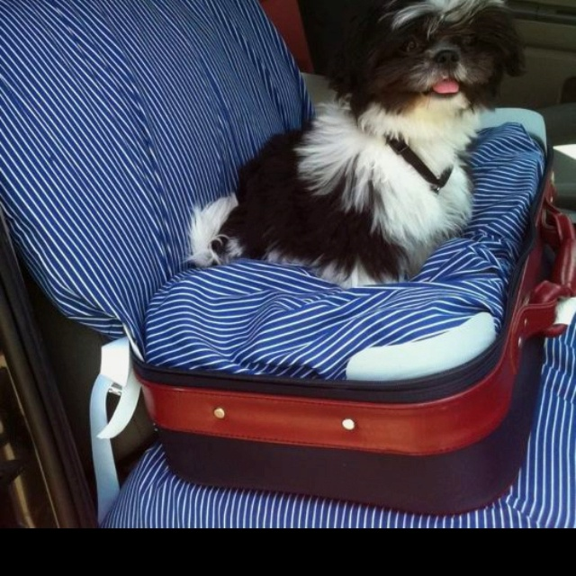 how to teach a dog to seat
