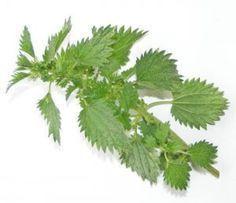 Remèdes Naturels contre l'arthrose (mains, cervical, hanche, colonne vertebrale, etc)