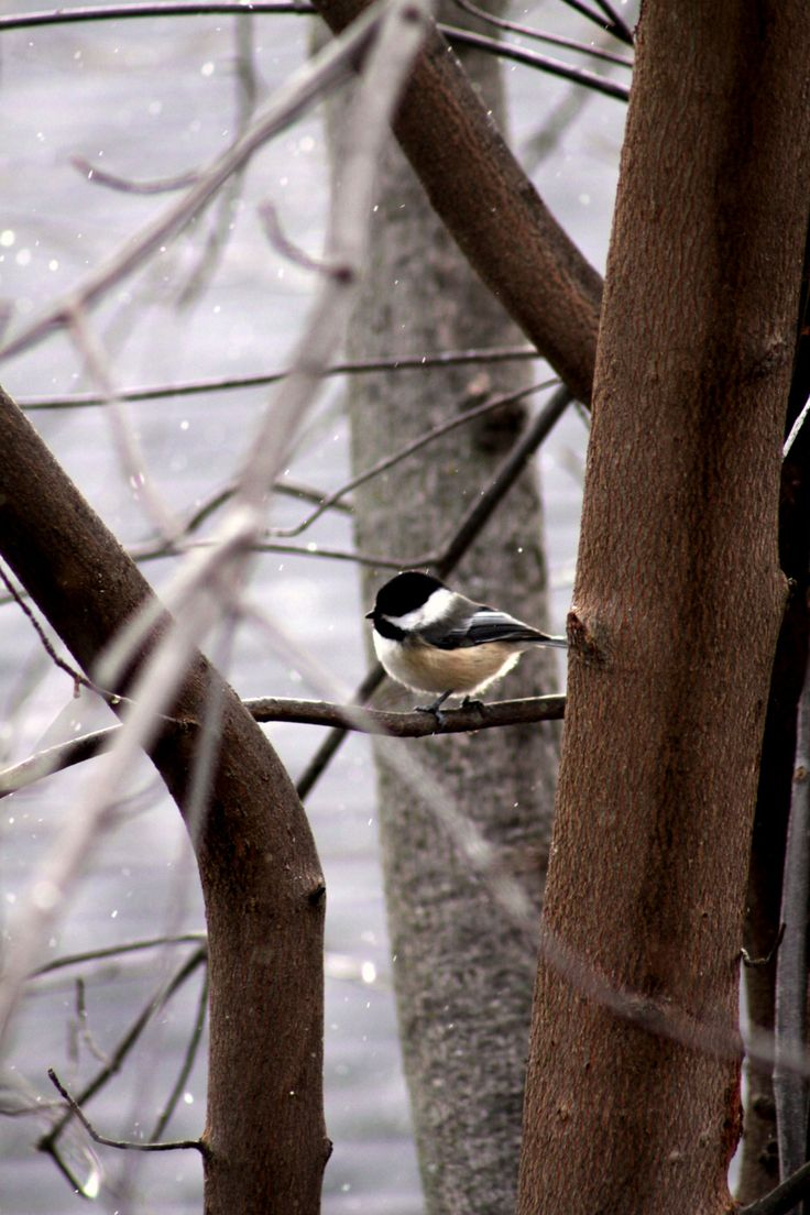 312 best a winter garden images on pinterest