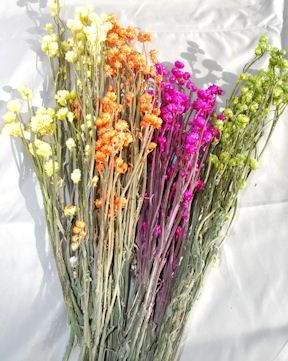 http://www.curiouscountrycreations.com/images/medium/dried-flowers/dyed-ammobium-winged-everlasting_MED.jpg