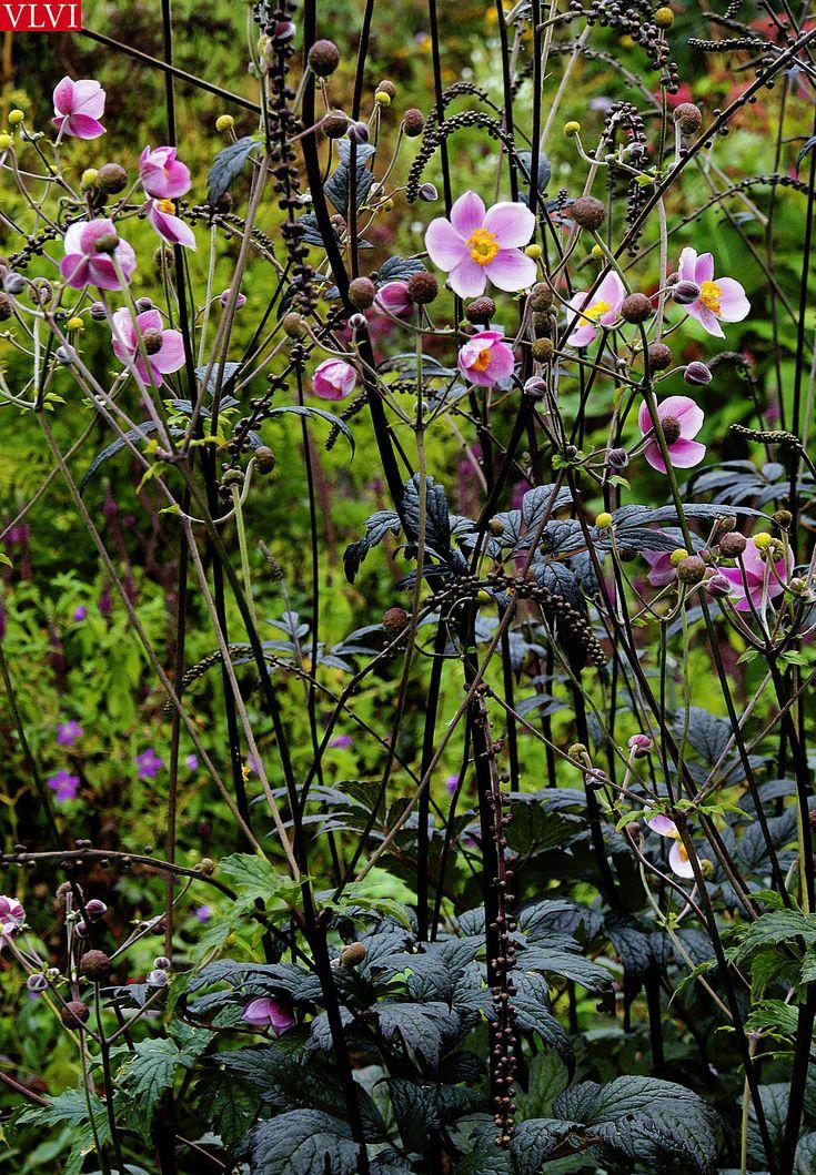 30-08 | in de tuin bij Piet Oudolf