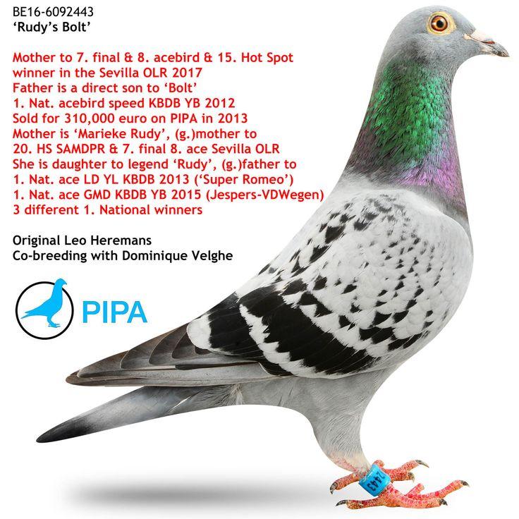 Rudy's Bolt | PIPA
