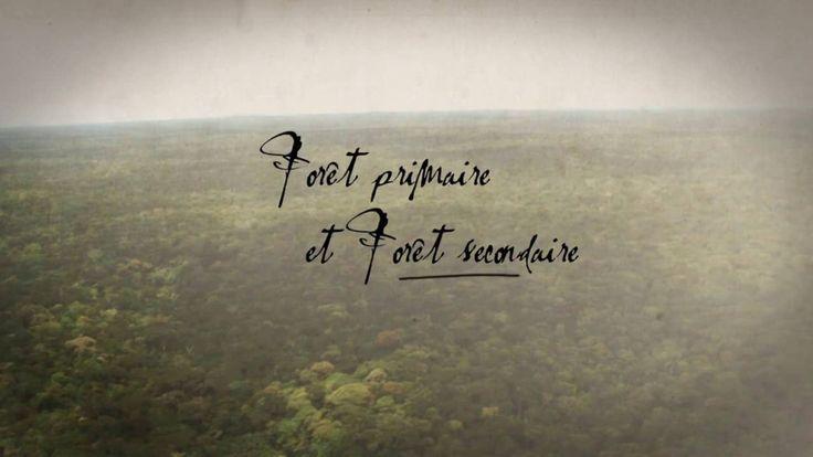 Vidéo :  Forêt primaire et forêt secondaire. Francis Hallé