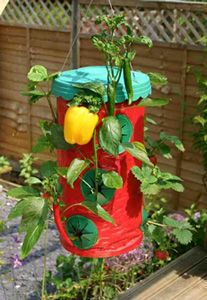 HANGING CHILLI & STRAWBERRY PLANTER - Garden Express