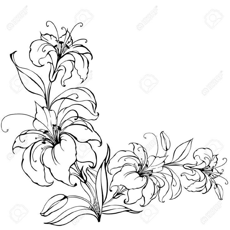 lily flower  blumenzeichnung lilien blumen