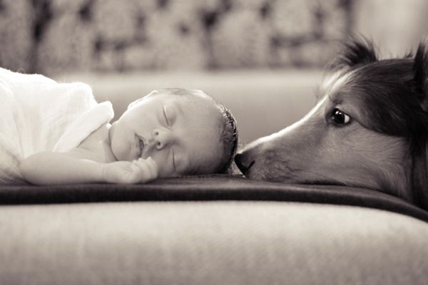 newborn - baby and dog. I can see both the girls being able to do this pic