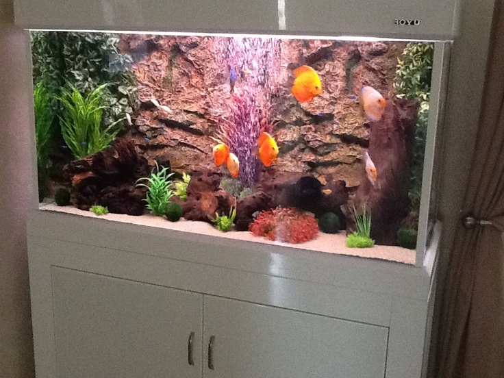 Sean's 120cm Boyu tank!    http://www.allpondsolutions.co.uk/aquarium-1/fish-tanks/cabinet-aquarium-fish-tanks/modern-cabinet-fish-tank-aquarium-328-litres-4ft-two-colours-6991.html