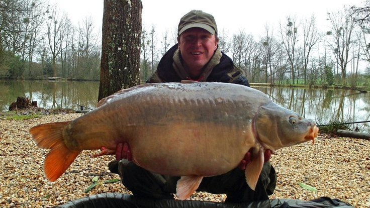 """I caught Patch, a 43lb mirror carp, in March 2013 with 2 x 20mm D-liver boilies on a 8"""" Beausoleil rig, fished over house pellet, and whole and chopped D-liver boilies #carpfishing"""