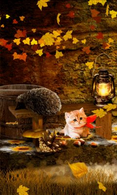 Fall Kitty nature animated autumn country leaves fall gif landscape autumn pics fall pics