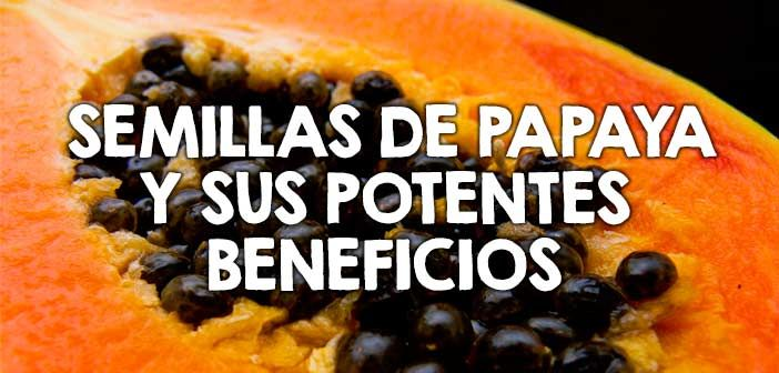 Semillas de papaya y sus potentes beneficios