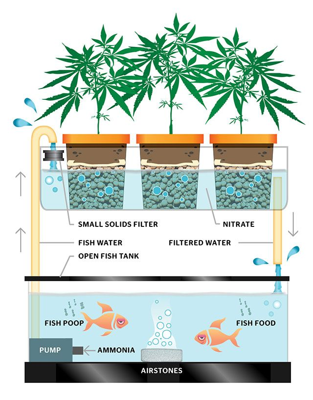 grow hack how fish can help with weeds water efficiency high times