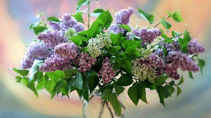 1920x1080_beautiful_flowers-485998.jpg (1920×1080)