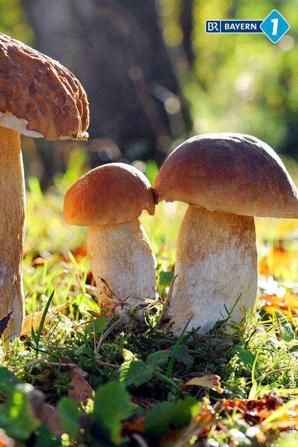 Pilze Sammeln Was Ist Beim Schwammerlsuchen Alles Erlaubt Br De Pilze Sammeln Pilze Getrocknete Pilze