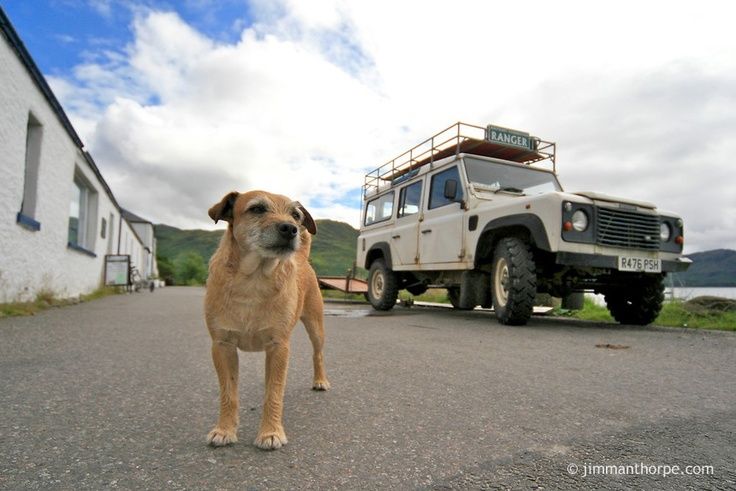 Land Rover and dog. Land Rover TORQUE magazine Battersea edition OUT NOW! http://cloud.idealershipmag.com/go/land_rover_battersea_torque_autumn/ #LandRover #Battersea #dog