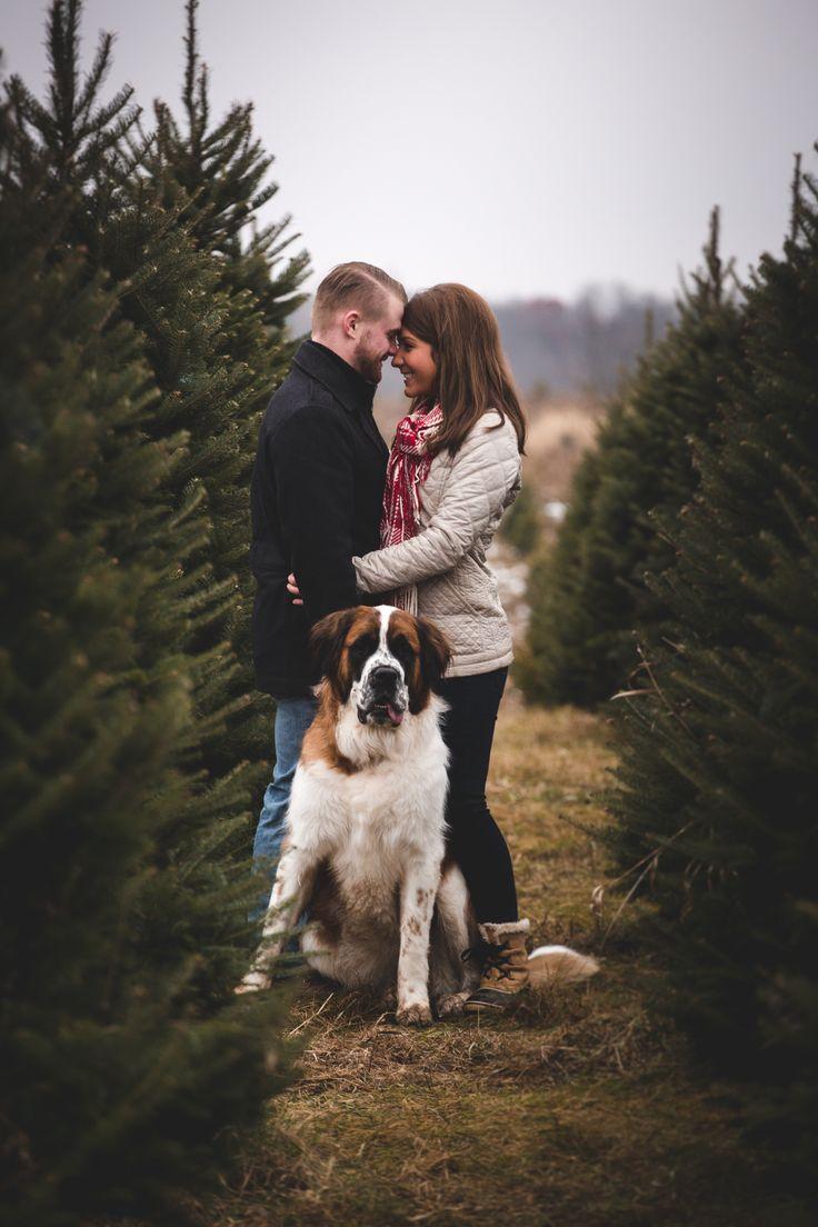 © CiogiArt Lifestyle Photography   Saint Bernard. Couple. Christmas. Tree Farm…