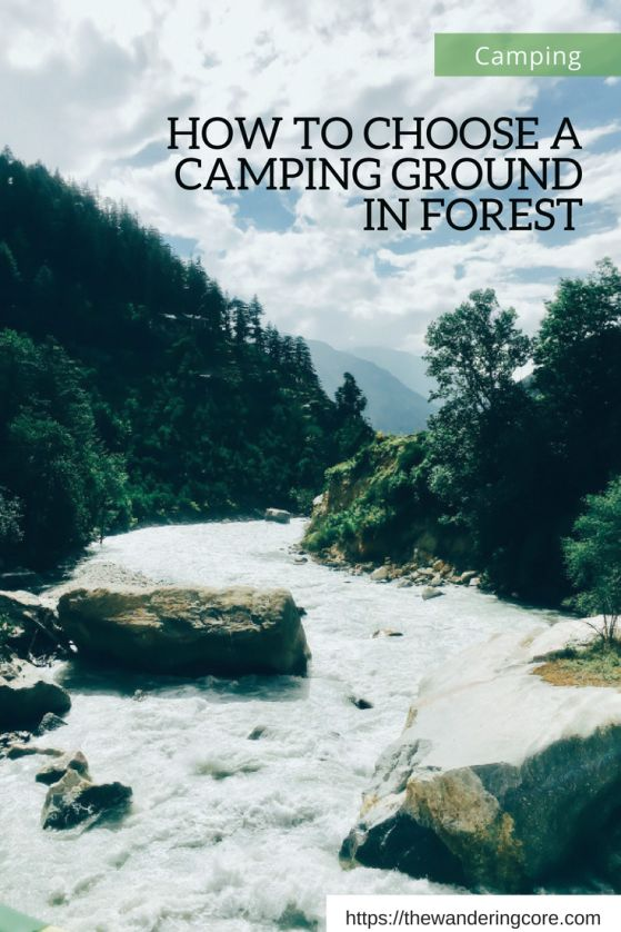 How to choose a camping ground in a forest || How to choose a campsite in a forest || How to choose family campgrounds in a forest || Camping || Forest || Travelling || Travel || Travel tips || The Wandering Core || #thewanderingcore #travel #traveltips #forest #campsites #campgrounds