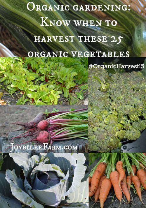 Vegetable Gardening: Live healthier and save money (Vitamines and Minerals Book 1)